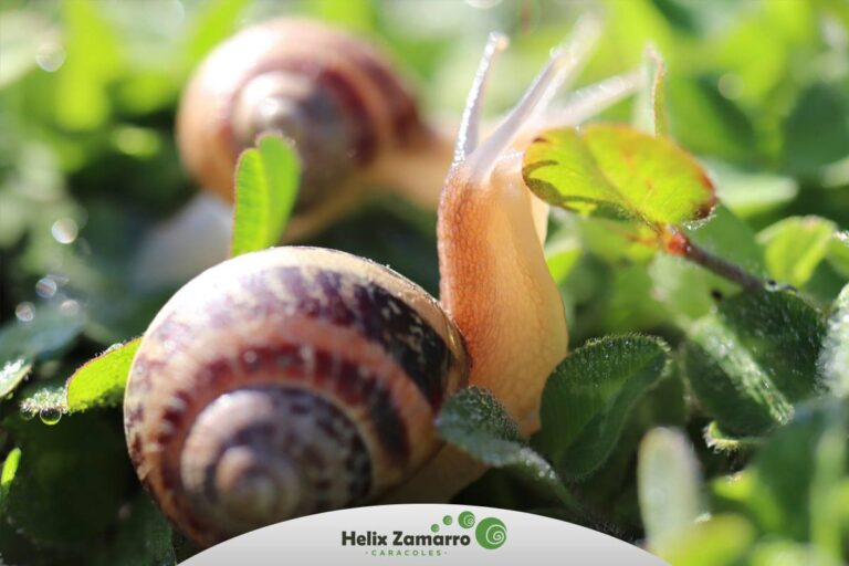 Granja de caracoles Helix Zamarro